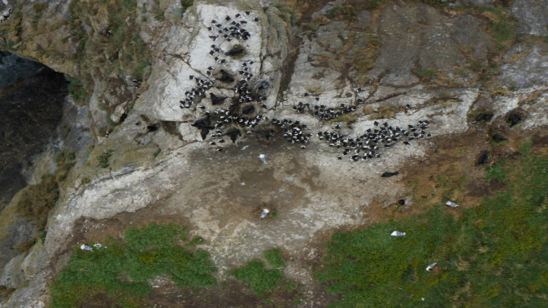 Approaching Birds with Drones:  First Experiments and Ethical Guidelines