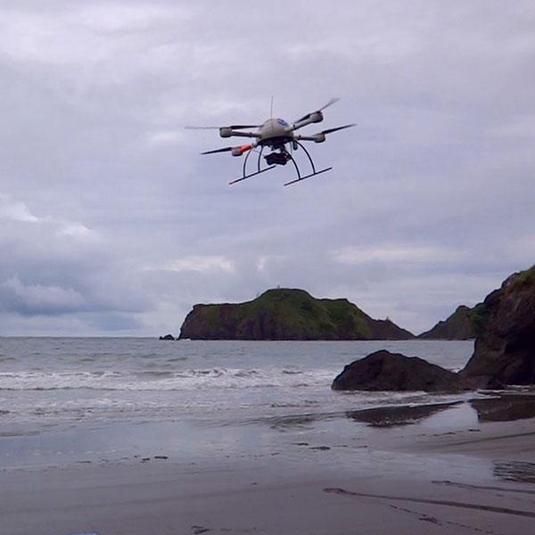 Sea Bird Survey – Oregon
