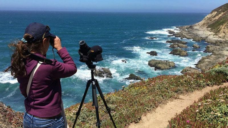 Black Oystercatcher Monitoring Program