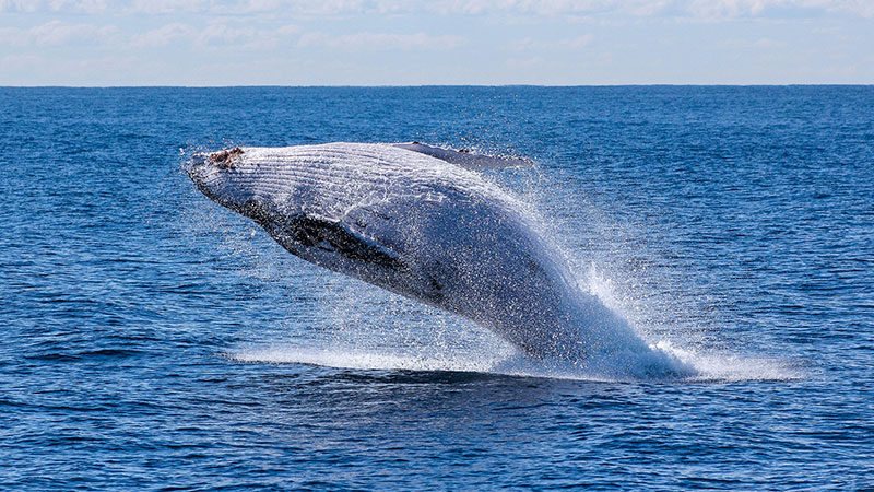 Unmanned Aircraft Systems: Responsible Use to Help Protect Marine Mammals