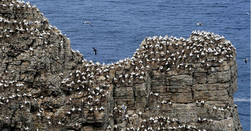 Seabird species vary in behavioural response to drone census